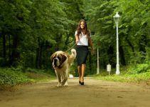 significado de sonhar com cachorro