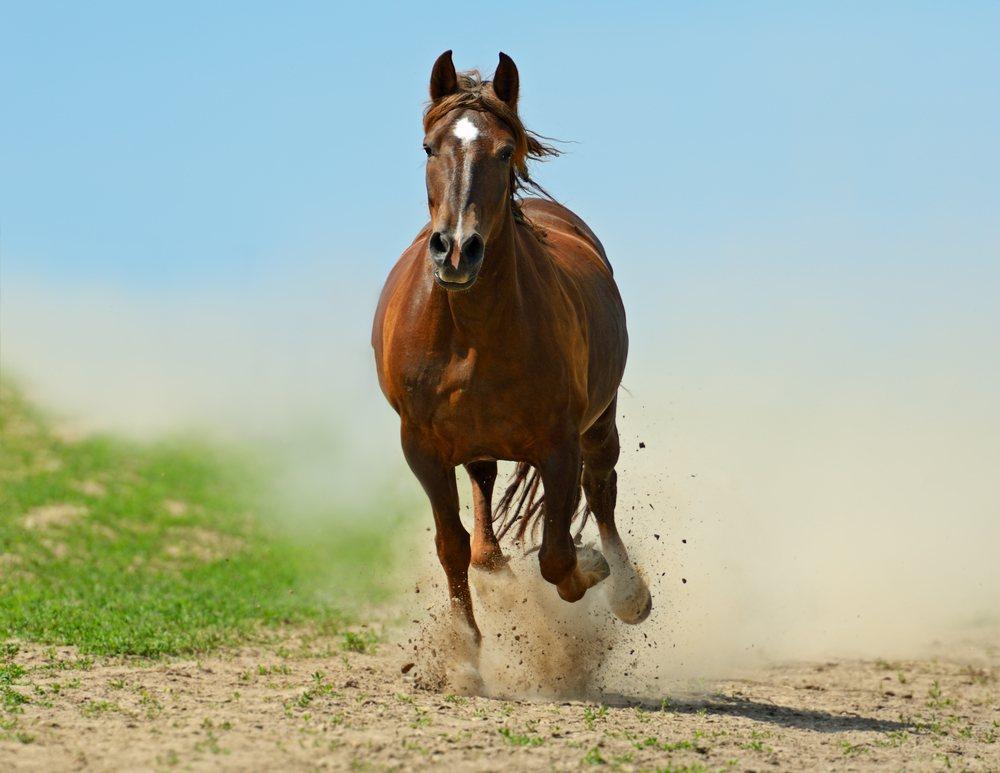 significado de sonhar com cavalo