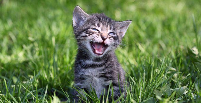 significado de sonhar com gato