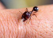 sonhar com formiga