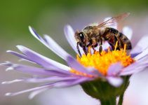 sonhar com abelha