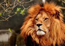 Qual o significado de sonhar com leão?
