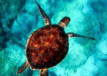 O que significa sonhar com tartaruga?