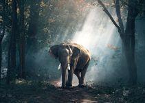 O que significa sonhar com elefante?