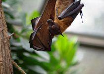 O que significa sonhar com morcego?