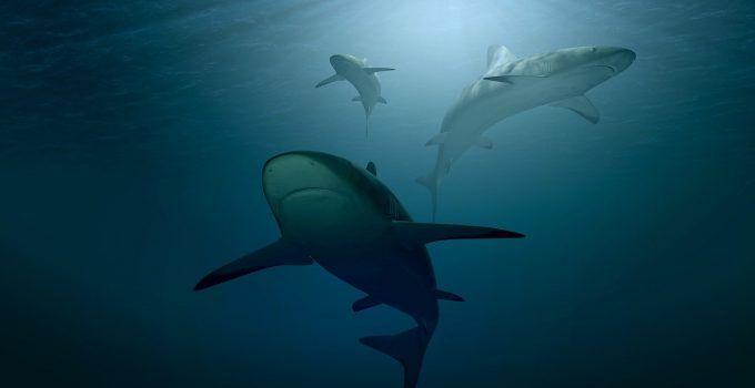 O que significa sonhar com tubarão?