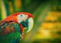 O que significa sonhar com papagaio?