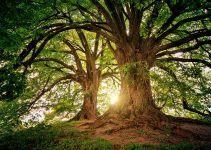 O que significa sonhar com árvore?