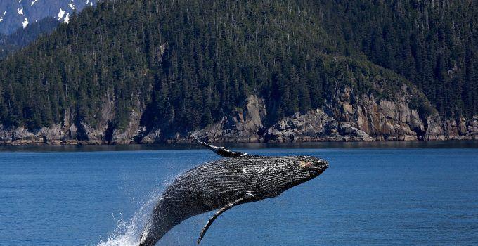 O que significa sonhar com baleia?