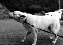 O que significa sonhar com cachorro bravo?