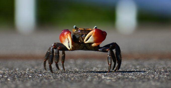 O que significa sonhar com caranguejo?