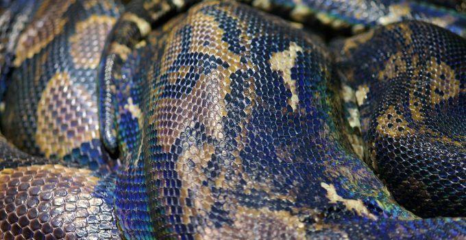 O que significa sonhar com cobra grande?