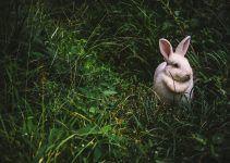 O que significa sonhar com coelho branco?
