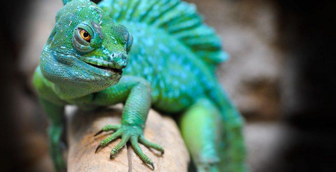 O que significa sonhar com lagarto?