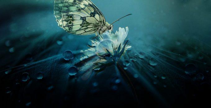 O que significa sonhar com borboleta?