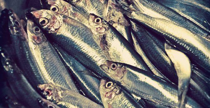 O que significa sonhar com peixe morto?