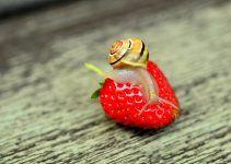 O que significa sonhar com vermes?