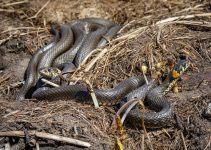 O que significa sonhar com muitas cobras?
