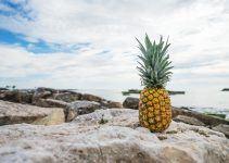 O que significa sonhar com abacaxi?