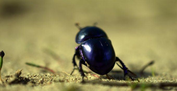 O que significa sonhar com besouro?